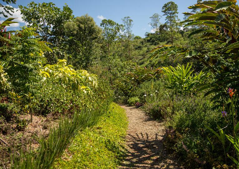 La temporada verde se queda en Kinkara Santa Elena, San José