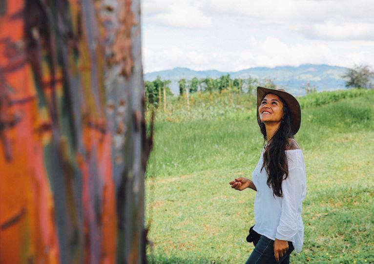 trees plantation or reforestation at kinkara luxury retreat santa elena