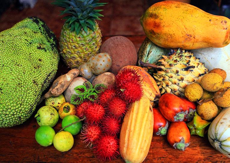 food forest and vegetable garden at kinkara santa elena