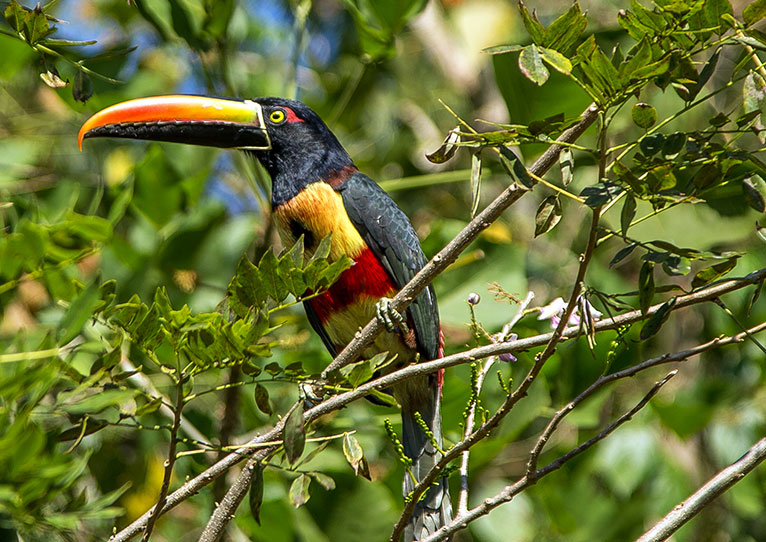 explore the natural world of kinkara santa elena